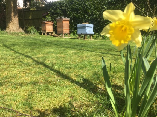 Bees and beehives Amersham